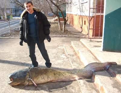 http://www.vp.donetsk.ua/Image/2525.jpg